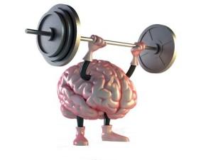 hersenen16774237_s